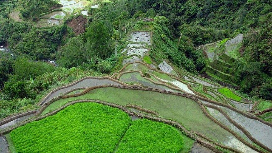 God's Own Creation: Banaue Rice Terraces