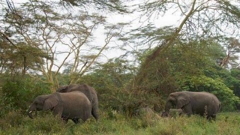 Ngorongoro Crater: Breathtaking Natural Wonder