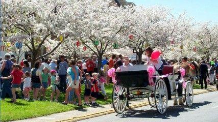 A New Vision Of Spring: Washington DC Cherry Blossom Festival