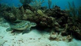 Underwater At Belize Barrier Reef