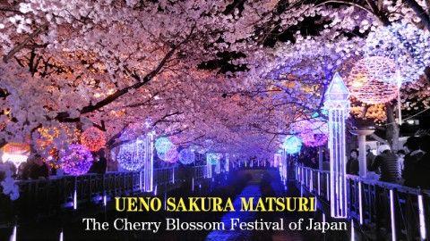 Ueno Sakura Matsuri: The Cherry Blossom Lantern Festival of Japan