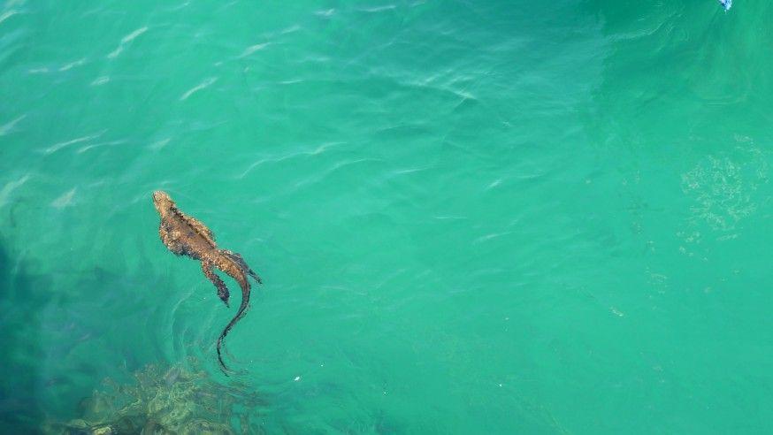 Wildlife Holidays in Galapagos Islands