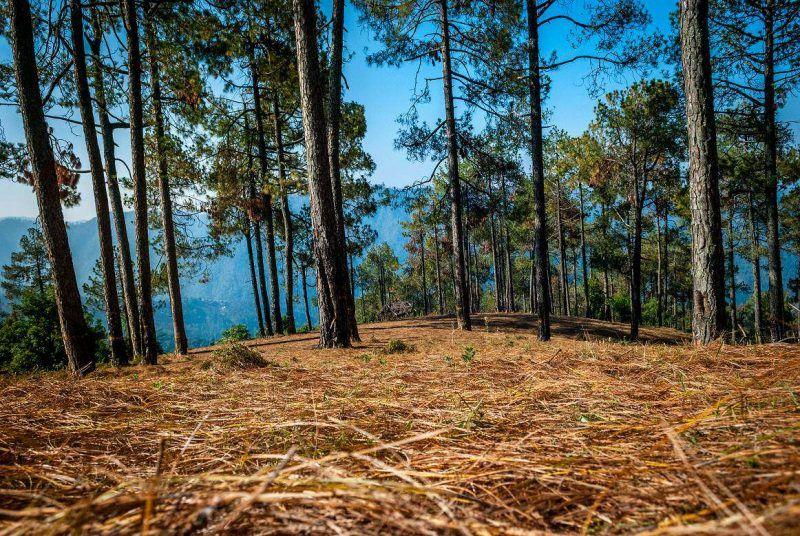 Binsar View