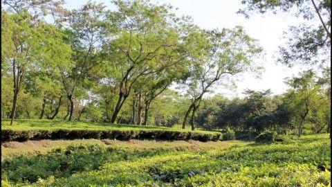 A guide to Dibru Saikhowa National Park, Assam