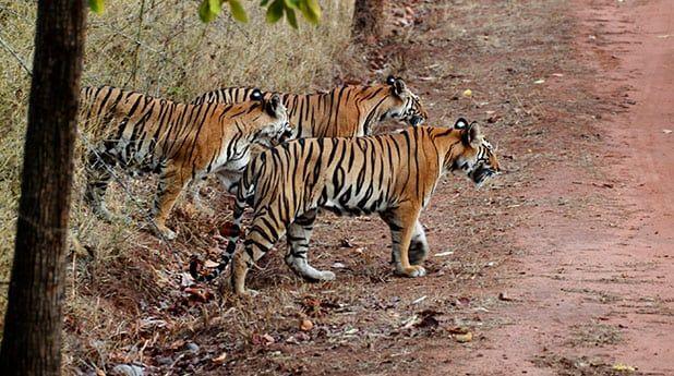 Dudhwa Tiger Reserve Image