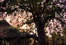 bandhavgarh national park and Tree House
