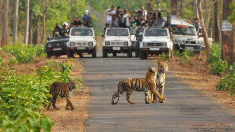 Love Wildlife? Top Wildlife Sanctuaries in India