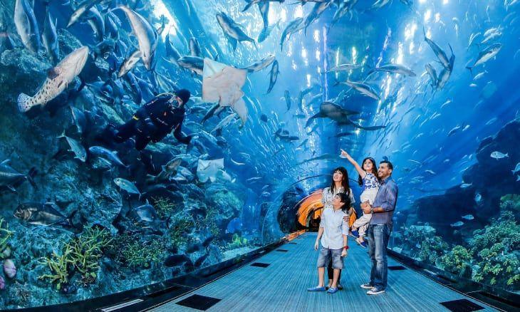 Dubai's Exotic Marine Life