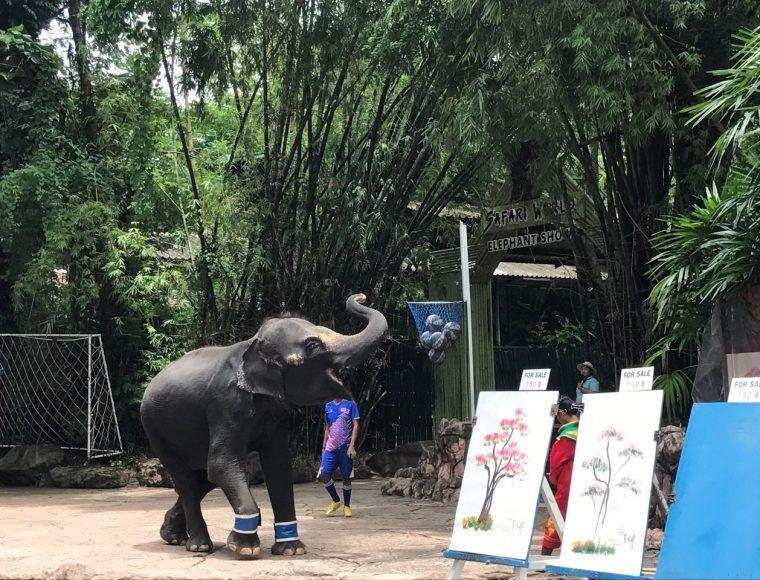 Elephant Show at Safari World