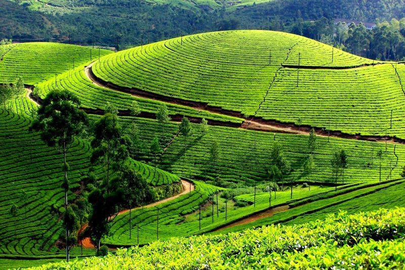 Munnar, source- India travel companion