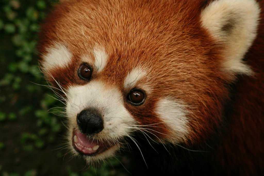 Sikkim Wildlife Sanctuaries