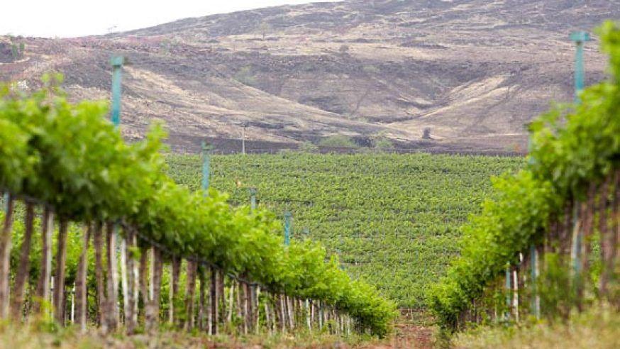Romantic Vineyards in India