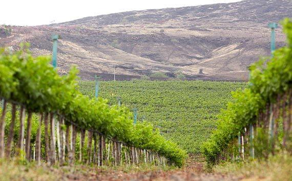 Fratelli Winery