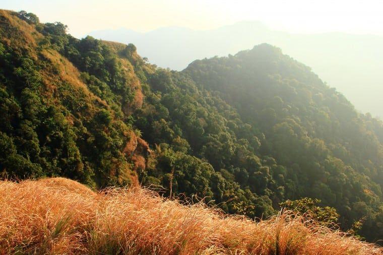 Trekking in the Virgin Forests