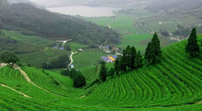 Source: Tamilnadu Tourist Places