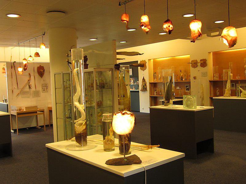 Icelandic Phallological Museum,