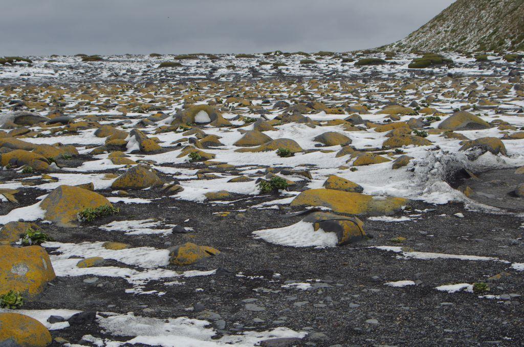 библейских описаниях мхи в антарктиде фото взять новый класс